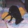 Appello Enpa per Lalla, cagnolina paralizzata che i padroni anziani e invalidi non possono permettersi di curare