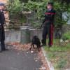 Blitz nei boschi: stop dei carabinieri allo spaccio di droga