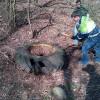 Gerenzano: dai boschi spunta una discarica di pneumatici