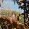 La protezione civile salva un falco dall'ala spezzata