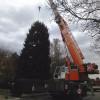 Arriva il grande albero di Natale in centro