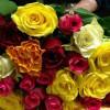 """Abusive e abbandonate le """"rose colorate di San Valentino"""""""
