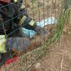 I Vigili del Fuoco salvano una volpe intrappolata