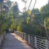 Vento: albero sul ponte strallato, vetrata abbattuta a scuola