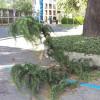 Che vento a Saronno: tutti i danni fra centro e periferia