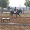 Kim il cavallo più bello alla Fiera di Origgio