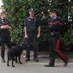 balto cane antidroga carabinieri