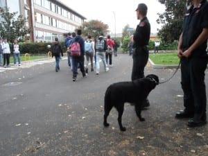 balto cane antidroga carabinieri (2)