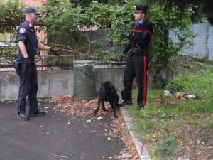 balto cane antidroga carabinieri (4)