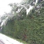 protezione civile neve saronno (5)