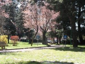 primavera parco salvo d'acquisto(6)