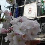 primavera3 (5)