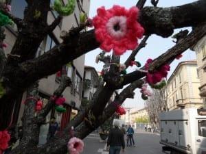 Fiori di lana in corso italia (3)