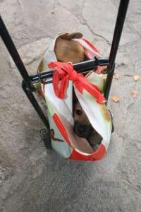 cani nel sacchetto a caronno pertusella