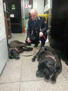 13122014 cani recuperati pl