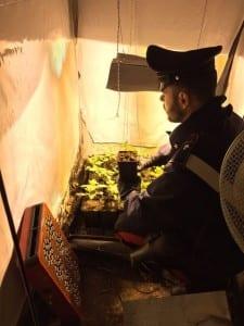 05022015  marijuana autoprodotto rovello porro (1)