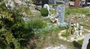 rescaldina cimitero erbacce