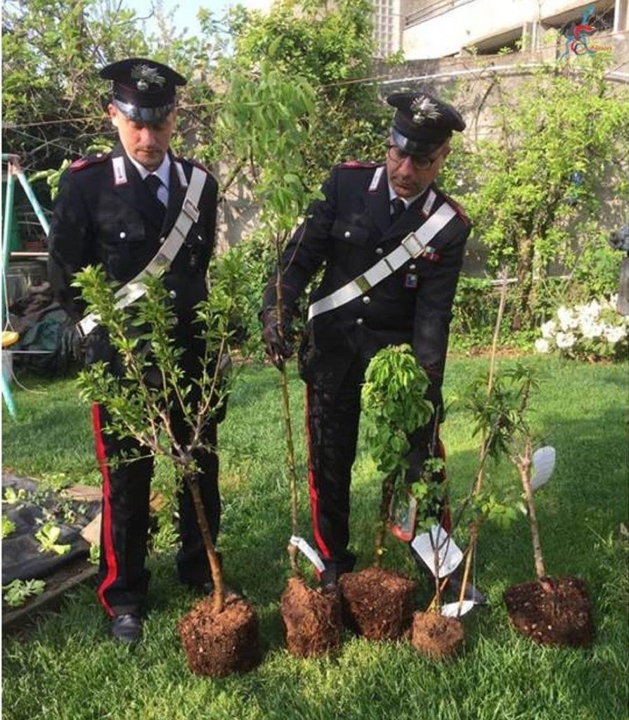 Foto Di Alberi Da Frutto furto di alberi da frutta, un arresto | ilsaronno