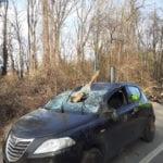 lazzate auto distrutta (2)